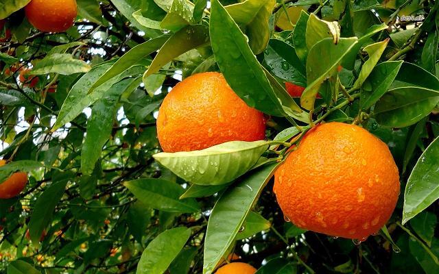 Adotta online un albero da frutto e ricevi il raccolto a casa