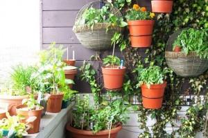 Piante da appartamento belle e semplici da curare