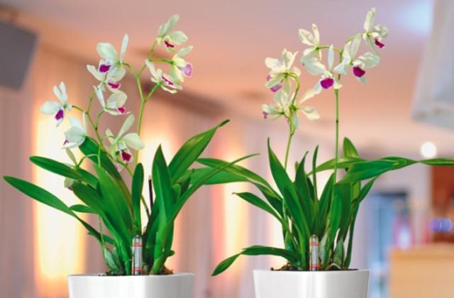 Piante da appartamento belle e semplici da curare pagina 2 di 6 - Piante da appartamento resistenti e decorative ...