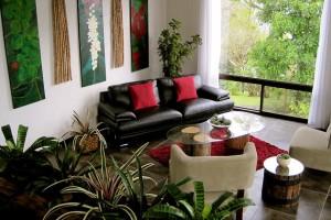 Combattere l'inquinamento domestico con le piante giuste