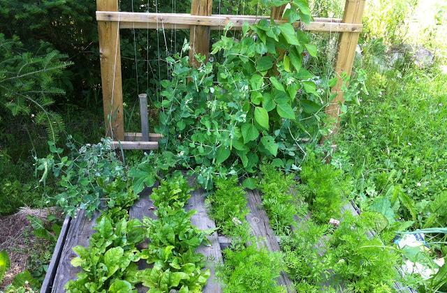 10 cose da sapere per iniziare a coltivare un orto - Conviene costruire casa prefabbricata ...