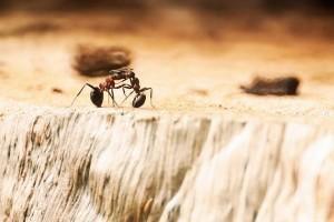 Tutti i rimedi efficaci contro le formiche in casa