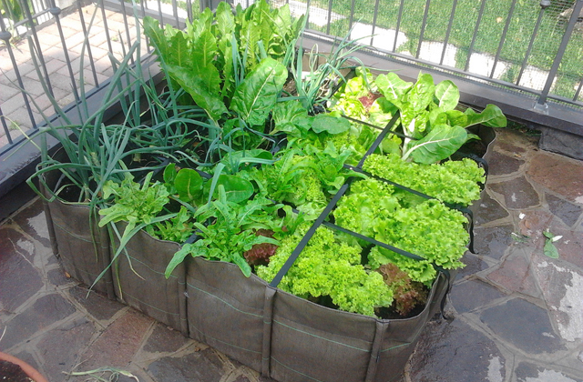Orto 5 consigli per coltivare ortaggi durante l 39 autunno e - Compost casalingo ...