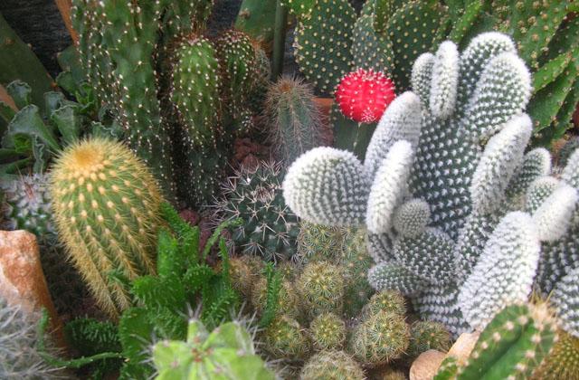 Creare un bel giardino con le piante grasse pagina 2 di 2 - Giardino piante grasse ...