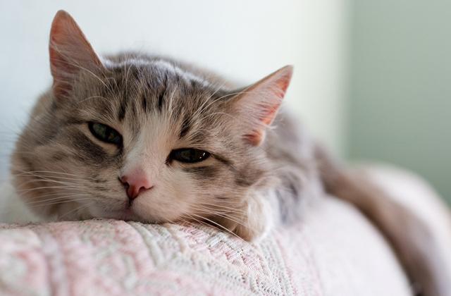 eliminare i peli di gatto