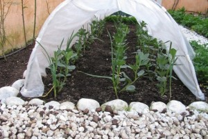 Orto, 5 consigli per coltivare ortaggi durante l'autunno e l'inverno