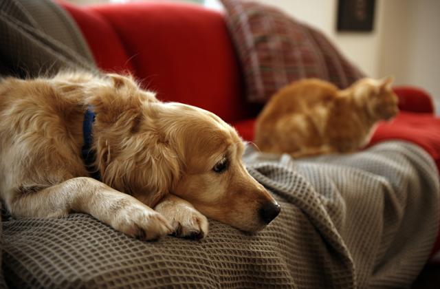 avere un cane tranquillo