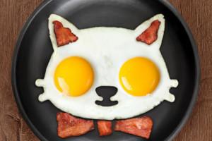 La formina per uova a forma di gatto