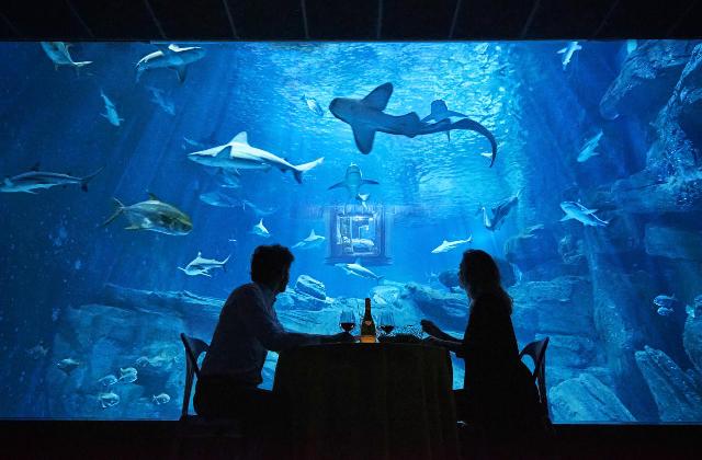 cenare con gli squali