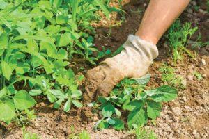 Modi efficaci ed economici per estirpare le erbacce