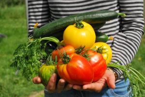 Mese di luglio: i lavori nell'orto