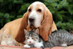 Possono convivere insieme il cane e il gatto?