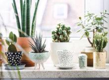 piante grasse per il bagno