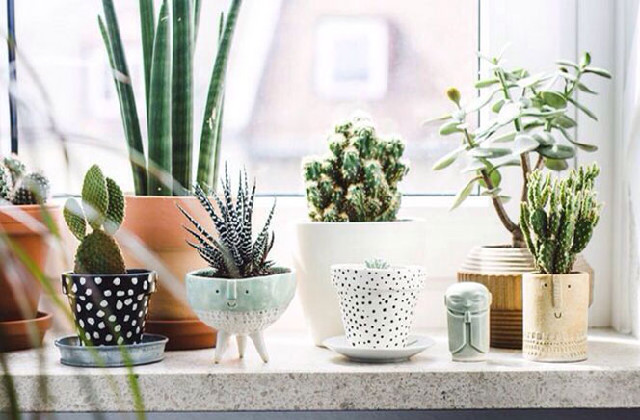 Le piante pi adatte per arredare il bagno qualche - Piante da bagno ...