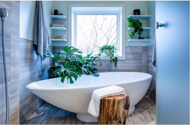felci vicino alla vasca da bagno
