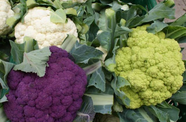 Febbraio cosa coltivare nell 39 orto e in vaso pagina 2 di 3 for Cosa piantare nell orto adesso