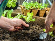 Cosa coltivare nell'orto a marzo