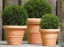 vasi per piante in terracotta