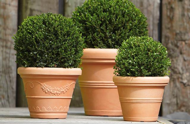 Come scegliere il vaso giusto per le piante for Piante da vaso per esterno