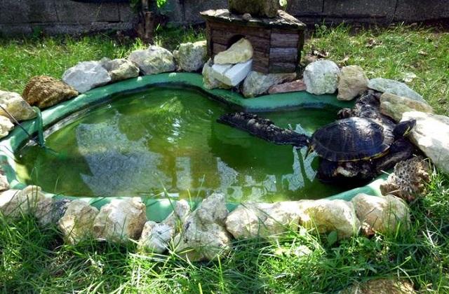 Le tartarughe d 39 acqua come costruire una vasca adatta a loro for Vasca per stagno