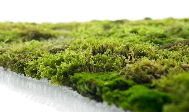terramac - tappeto di muschio