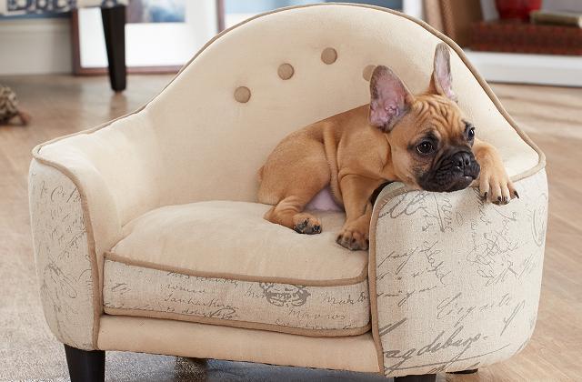 Un piccolo divano per animali domestici da aggiungere al salotto
