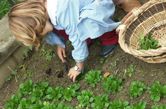 L'orto in giardino step by step