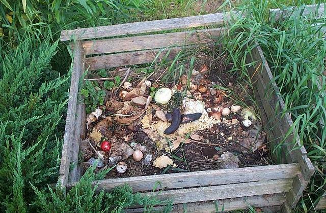 Come realizzare un orto domestico