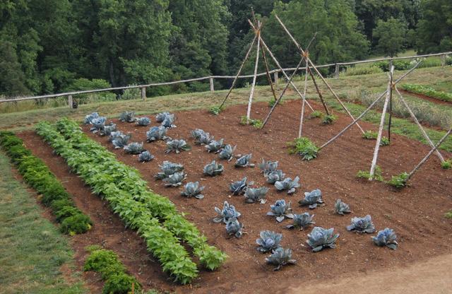 Frutta e verdura dell'orto domestico: più buona e salutare