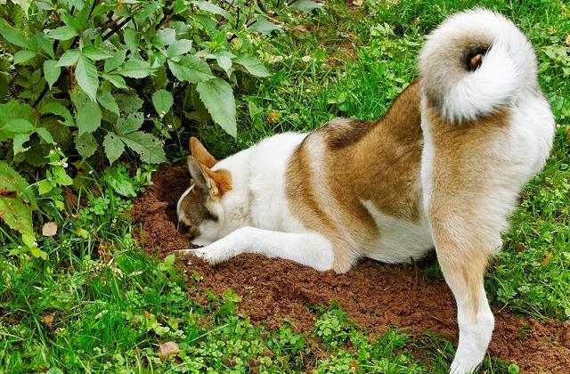 Cani e giardino: non eliminare l'erba e le buche