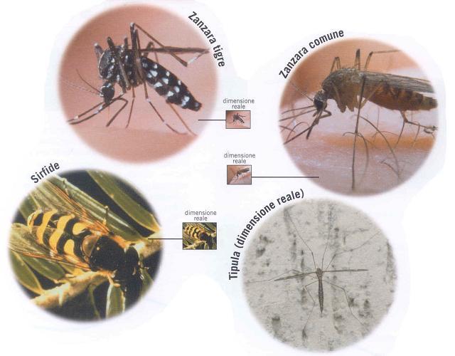Come eliminare le zanzare in casa in modo definitivo pagina 2 di 3 - Come eliminare le onde elettromagnetiche in casa ...