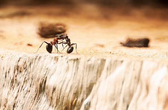 Tutti i rimedi efficaci contro le formiche in casa - Invasione di formiche in cucina ...