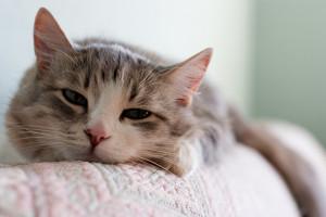 Eliminare facilmente e rapidamente i peli di gatto