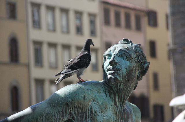 piccioni che danneggiano i monumenti