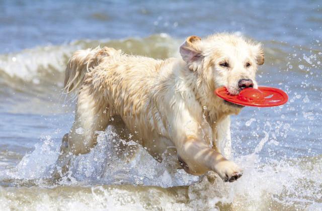 vacanza al mare col cane