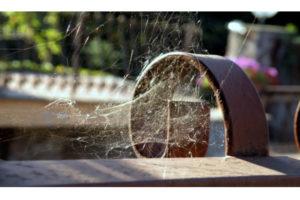 Allarme ragni in casa: risolvere con i rimedi naturali