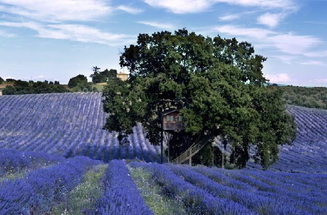 la casa sull'albero più bella d'Italia