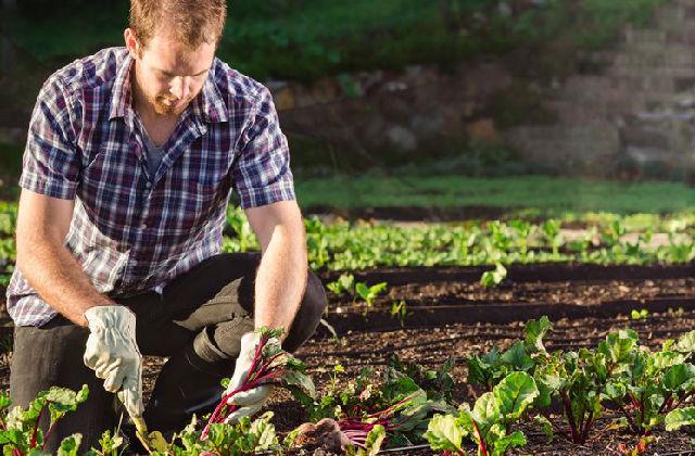 piantare in un orto nel mese di settembre