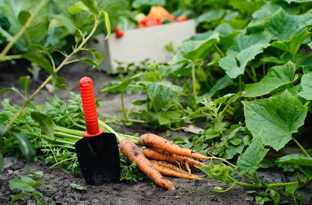 orto in autunno: cosa piantare