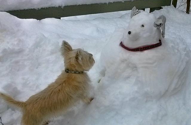 Come proteggere le zampe del cane dal freddo