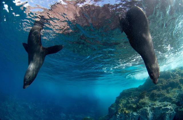 parco marino Hawaii