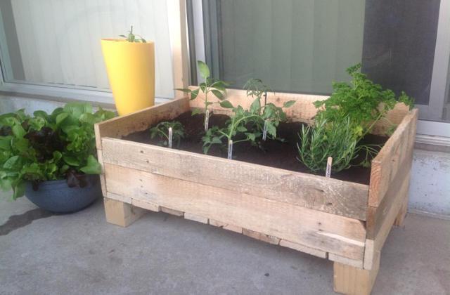grow box per i fiori