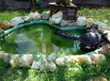 Le tartarughe d'acqua: come costruire una vasca adatta a loro