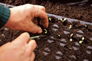 Orto in novembre: semina e raccolto