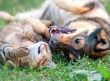Come far convivere insieme cane e gatto: regole e consigli utili