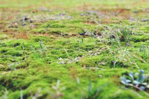 Prevenire la formazione di muschio in giardino