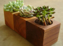 vasi in legno per piante grasse