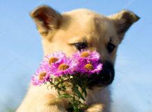 cane mangia fiore