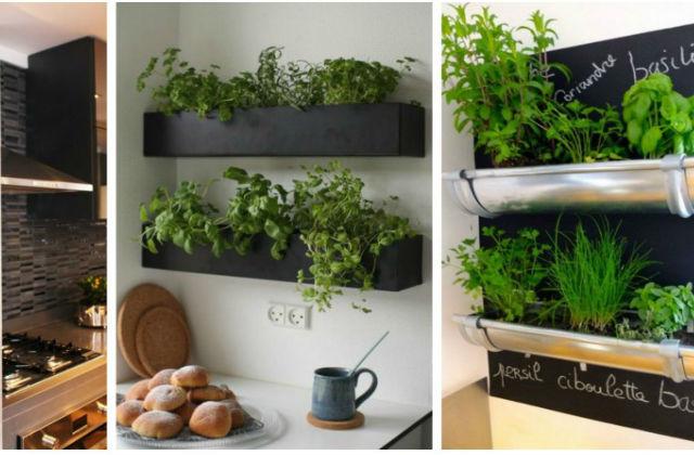 Decorare la cucina con le piante aromatiche - Pagina 2 di 2