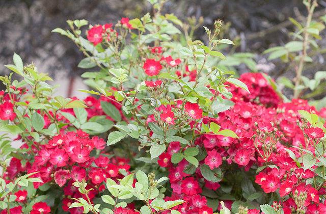 fioriture fine estate